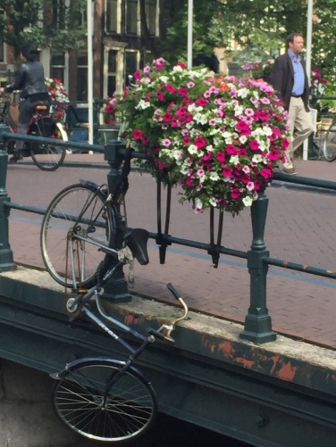 Bike mishap in Amsterdam.